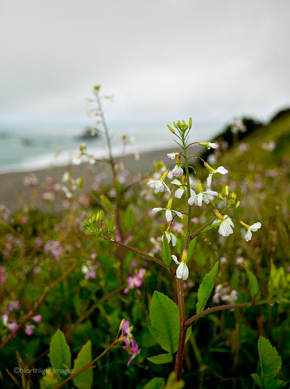 flowers on the cliff top