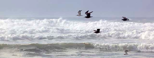 birds in flight - ocean waves