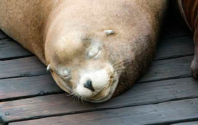 cute sea lion at Newport Oregon