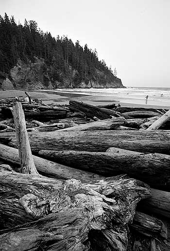 logs on an oregon beach