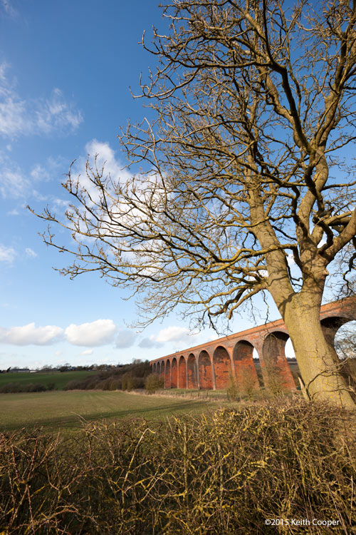 viaduct and tree in Leicestershire