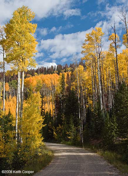 aspen colour - hahn's peak colorado