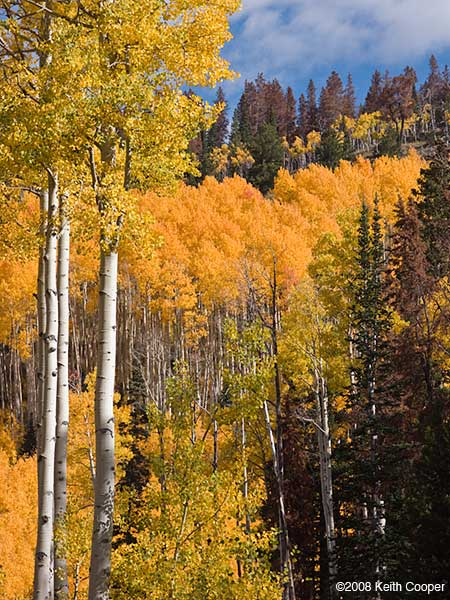 fall colours hahns peak colorado