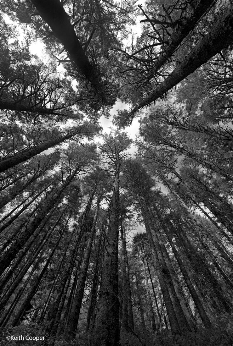 looking upwards in a forest