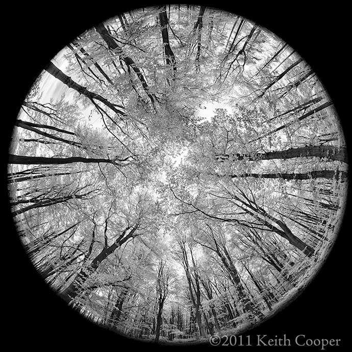 IR monochrome view of woodland - 180 degree fisheye