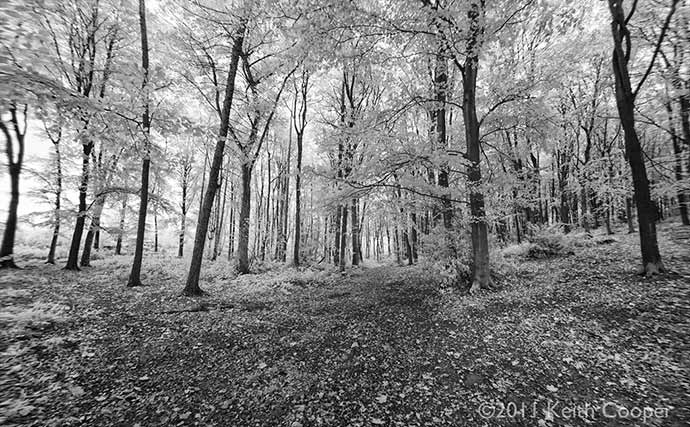 woods viewed in black and white infrared