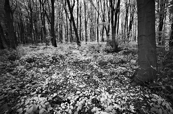shady cwoods viewed in black and white infrared