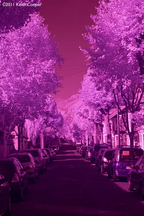 infra red view up tree lined street with cars