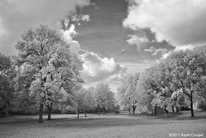 country park viewed in black and white infrared