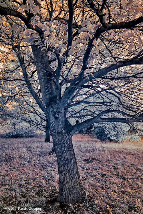 false colour infrared view of a tree