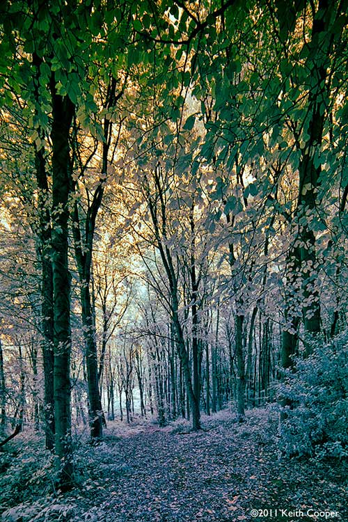 false colour woodland IR view