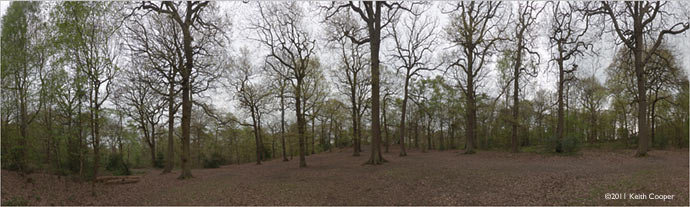 large panoramic print of swithland woods, leicestershire