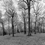 Swithland Woods in April