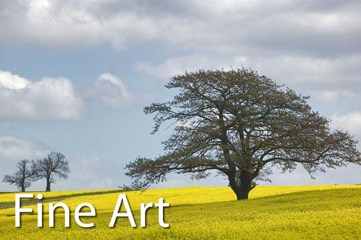 Tree and yellow - fine art print