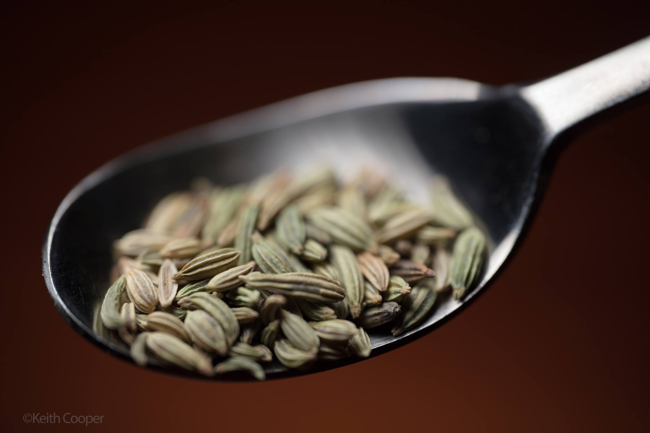 individual-fennel-seeds-photo